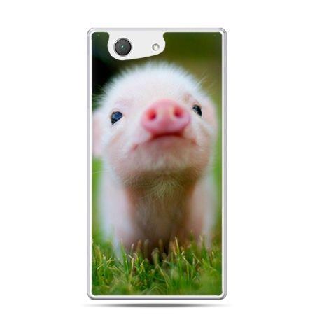 Xperia Z4 compact etui świnka