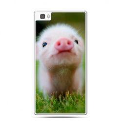 Huawei P8 etui świnka