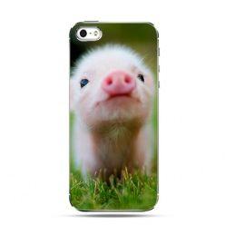 Etui słodka świnka